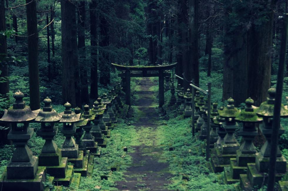 یک حرم شگفت انگیز در جنگل باستانی ژاپن