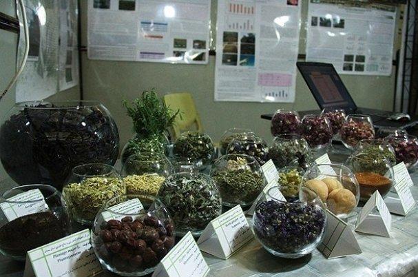 ستاد توسعه گیاهان دارویی از شرکت های خلاق حمایت می نماید