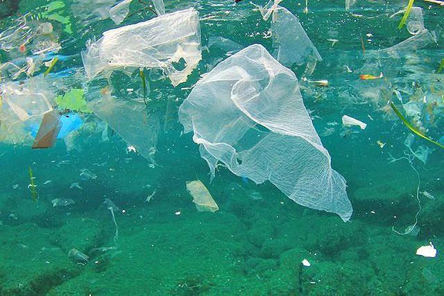 یاری به کاهش آلودگی های پلاستیکی با طراحی دیوار دریایی در سیدنی