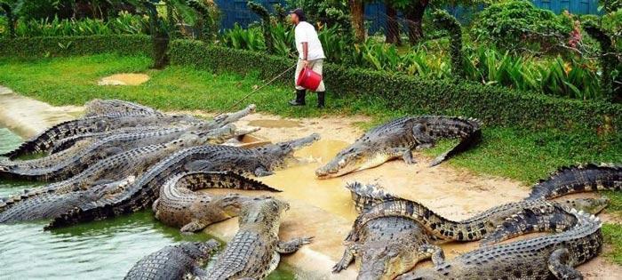 آشنایی با مزرعه تمساح ها در پاتایا