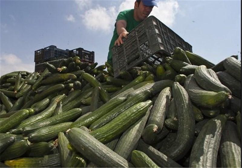 زیان 200 میلیون یورویی بخش کشاورزی ایتالیا از تحریم های روسیه