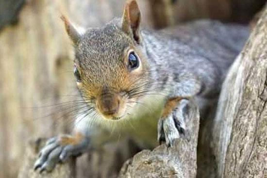 تبعید سنجاب ها در کانادا!