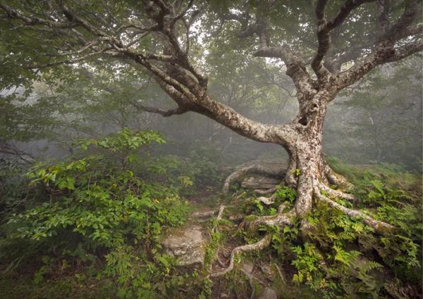 حرکت عجیب زمین در یکی از جنگل های کانادا