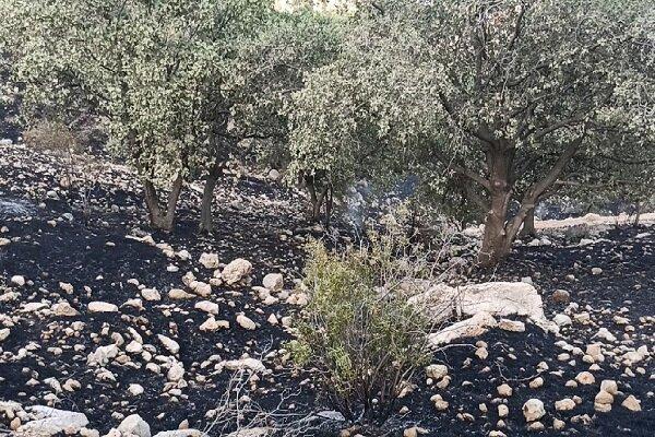 40 هکتار جنگل قربانی اختلاف سر زمین ، عاملان آتش سوزی خائیز دستگیر شدند